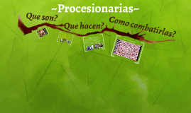 Procesionarias