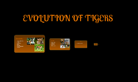 Evolution Of Tigers