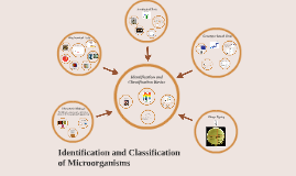 Copy of Classification and Identification of Microbes