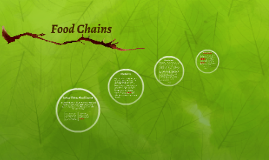 Copy of Food Chains- 2016- Honors