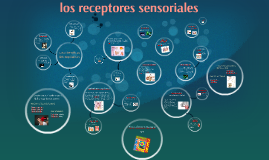 Copy of los receptores sensoriales