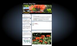Copy of African Tulip Tree