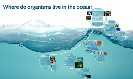 Where do organisms live in the ocean?
