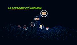 LA REPRODUCCIÓ HUMANA