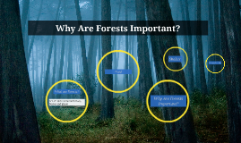 Why Are Forests Important?