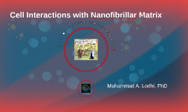 Copy of Cell Interactions with Nanofibrallar Matrix