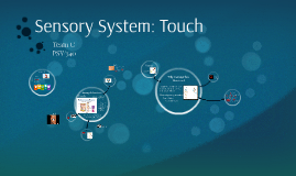 Sensory System Touch