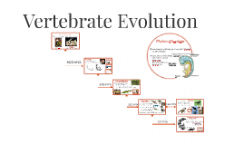 Vertebrate Evolution
