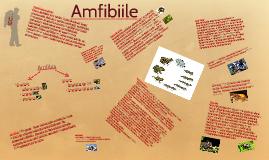 Copy of Amfibia ( din greac- doua vieti) este o clasa de animale ovi