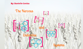 The Nervous and Endocrine System