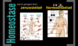 Homeostase: hormonen + zenuwstelsel