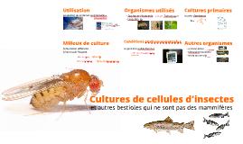 101BT6-Cultures de cellules d'insectes