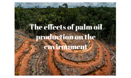 The effects of palm oil production on the environment