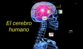 Copy of El cerebro humano