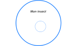 mon insect