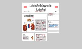 Copy of Anatomía y Función Suprarrenales y Glándula Pineal