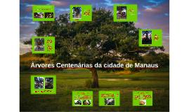 No Amazonas existem diversos tipos de árvores centenárias, a