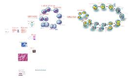 Copy of La Division Celular