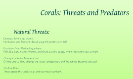 Coral Reefs: Threats and Predators