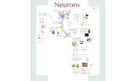 Neurons- CH 48