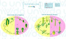 Ciclos de vida: hepáticas y musgos