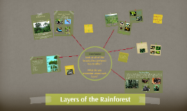 Copy of Layers of the Rainforest