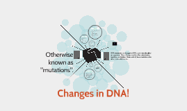 Changes in DNA!