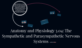 Anatomy and Physiology 3.04: The Sympathetic and Parasympath