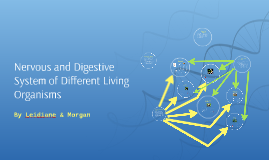 Copy of Nervous and Digestive System of Different Living Organisms