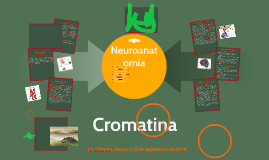 Copy of Prolactina