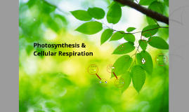 CGHS Biology: Photosynthesis & Cellular Respiration