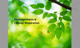 CGHS Biology: Photosynthesis & Cellular Respiration