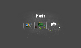 Copy of What Plants Need