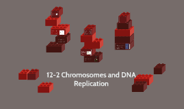 Copy of 12-2 Chromosomes and DNA Replication