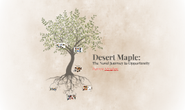 Desert Maple