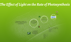 The Effect of Light on the Rate of Photosynthesis