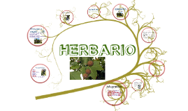 Copy of Herbario
