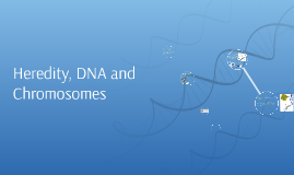 Heredity, DNA and Chromosomes
