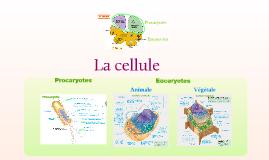 La cellule et les organites
