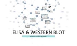 ELISA & WESTERN BLOT