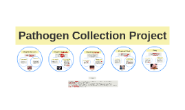Pathogen Collection Project