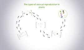 Advantages and disadvantages of asexual reproduction in flowering plants