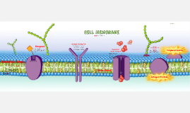 Cell Membrane & Transportation
