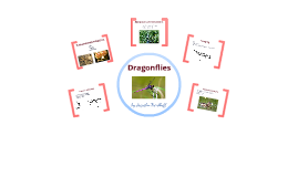 Copy of Arthropoda - Dragonflies