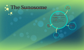 The Sunosome