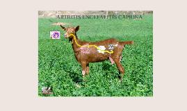 ARTRITIS ENCEFALITIS CAPRINA