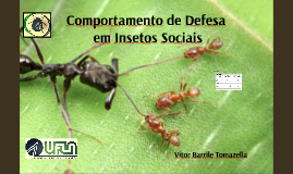 Comportamento de Defesa em Insetos Sociais