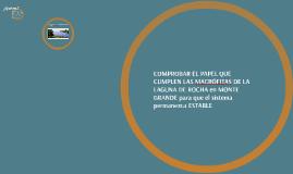 Copy of Copy of COMPROBAR EL PAPEL DE LAS MACRÓFITAS DE LA LAGUNA DE ROCHA-M