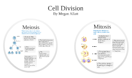Copy of Cell Division