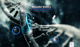 Synthetic molecular walkers